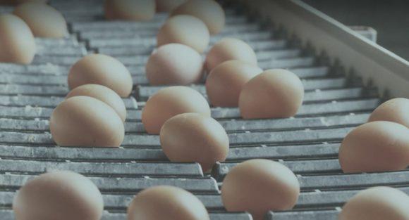 csm camar huevos seguridad