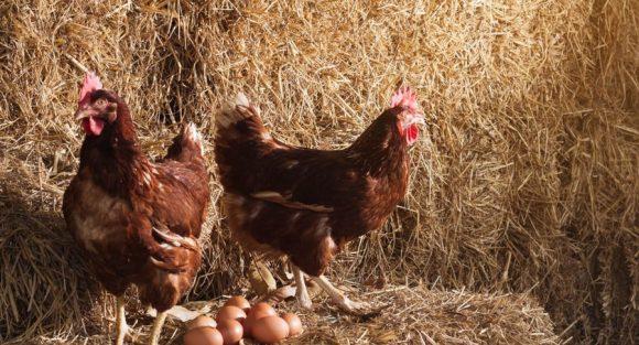 csm confianza calidad responsabilidad huevos