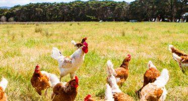 huevos-calidad-responsabildiad-confianza-650x933
